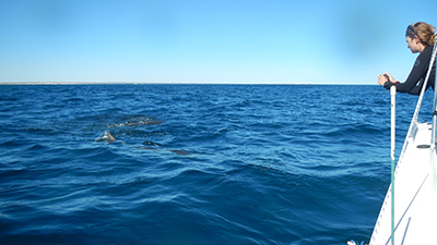 conduct reef shark counts from the shore