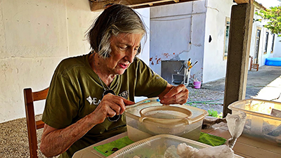 Volunteer analyzing ancient Portuguese artifacts
