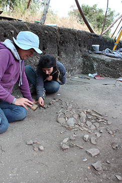 Archaeology in Portuguese vineyard