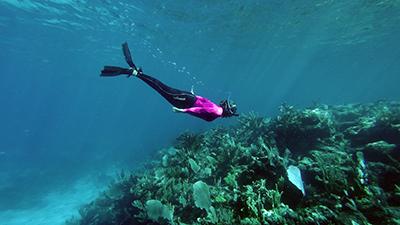 Snorkel through turtle habitats