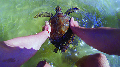 Catch and tag sea turtles