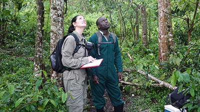 Follow foraging primates