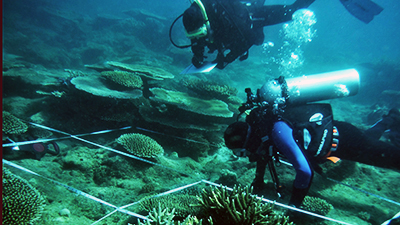 Measure corals and conduct crawl