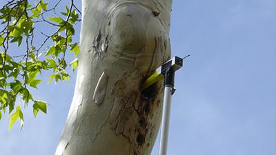 measuring owl habitat