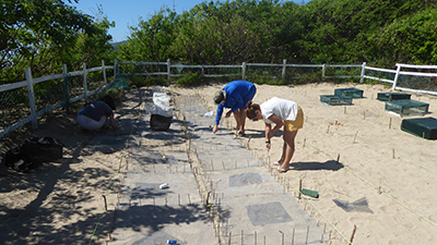 Relocate sea turtle nests © Ed Talbot