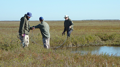 Survey whooping crane food resources