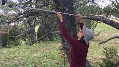 Tree Growth Surveys