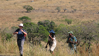 Volunteers hiking in the African savanna