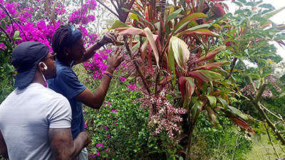 Observe and count pollinator visits (C) Blanca Gonzalez