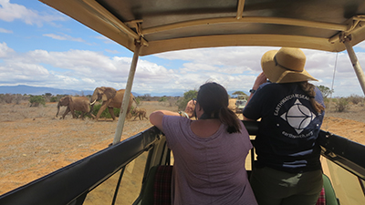 Earthwatch volunteers monitor elephants (C) Rachael Biggs