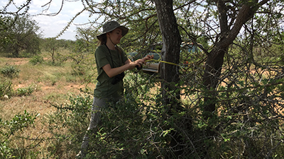 An Earthwatch volunteer measures a tree (C) Kim Cassello