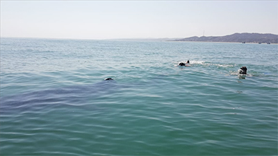 Earthwatch volunteers snorkel with giant manta rays (C) Kyle Hutton