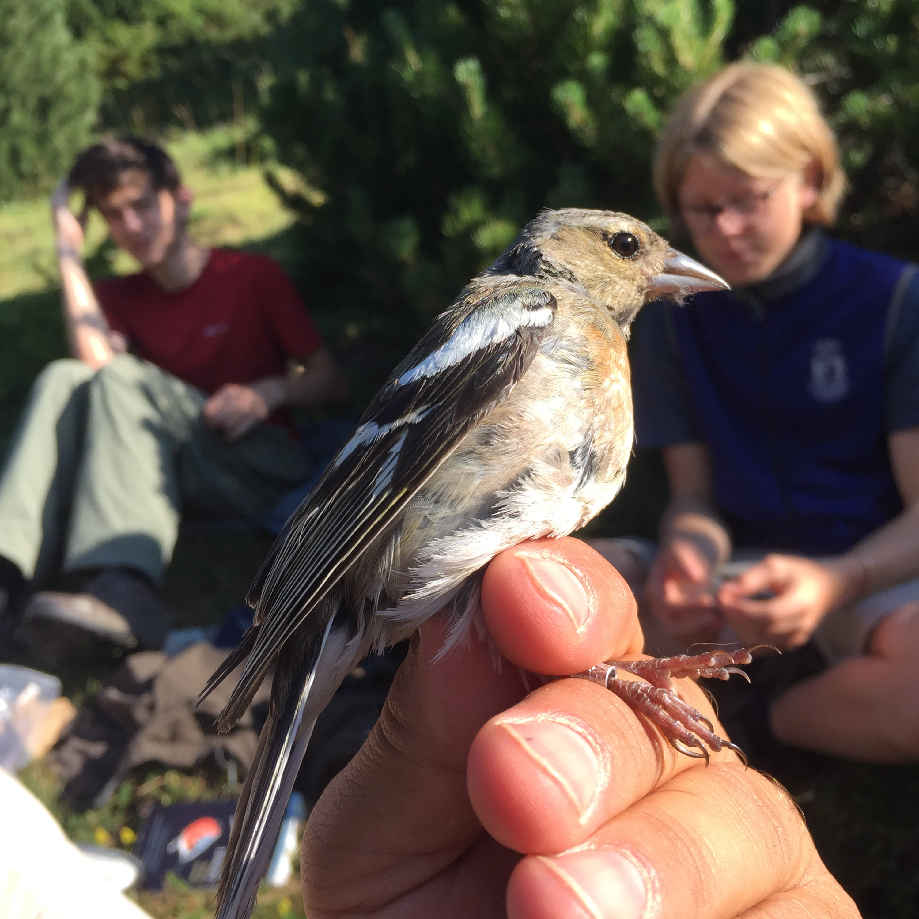 Student groups have a variety of expedition options including hiking the Andorran Pyrenees searching for signs of climate-related stress in birds and other wildlife.