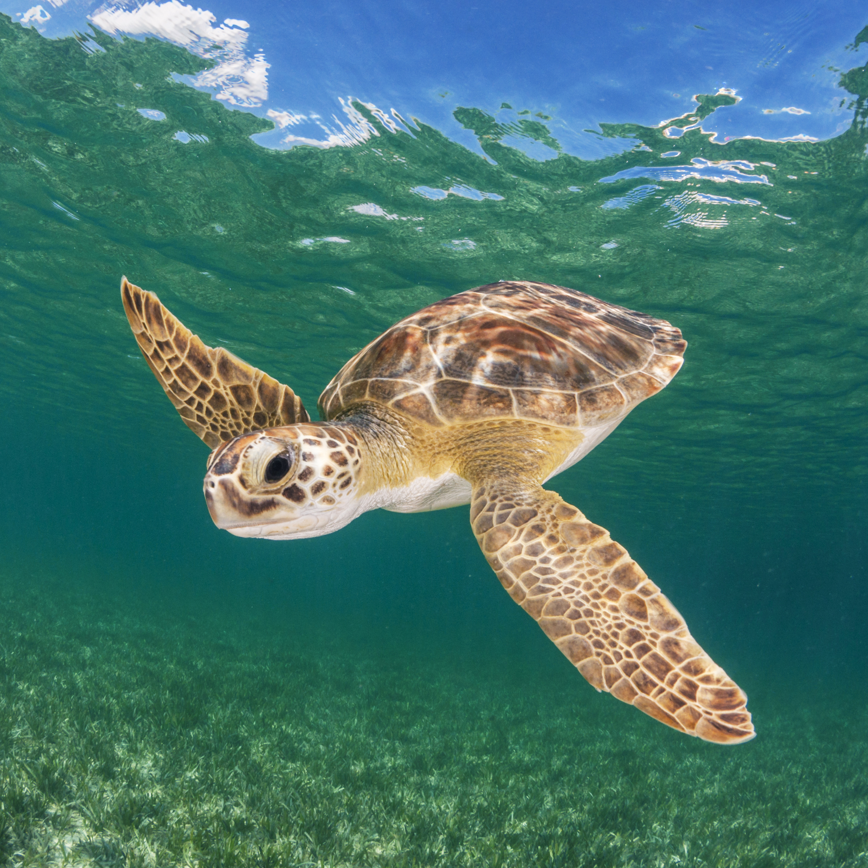 Earthwatch student groups have a variety of expedition options including studying sea turtles in the Bahamas
