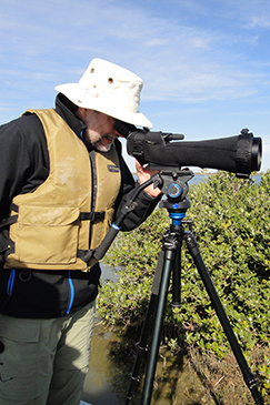An Earthwatch volunteer scans the marsh with a telescope