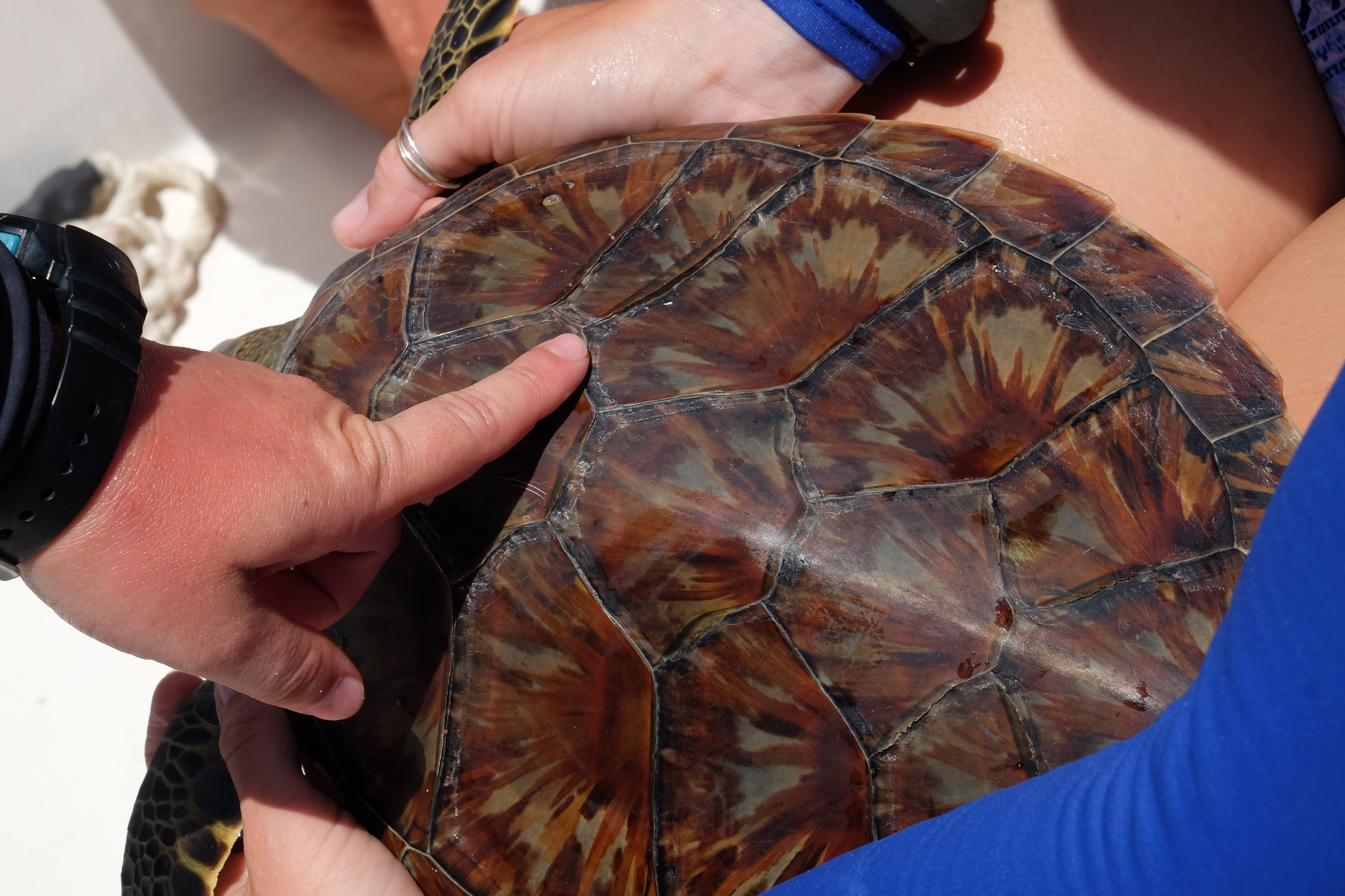 Earthwatch volunteers observing the shell of a turtle.