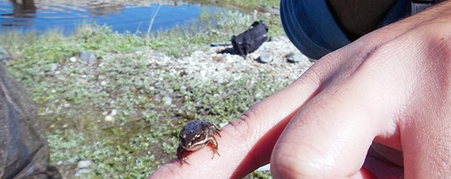 A small frog on a person's finger