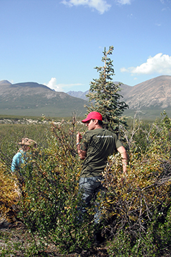 volunteers studying climate change in the mackenzie mountains