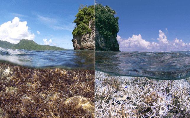 The difference between a vibrant, healthy reef and a bleached reef (Courtesy XL Catlin Seaview Survey)