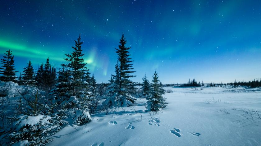 northern lights in the arctic