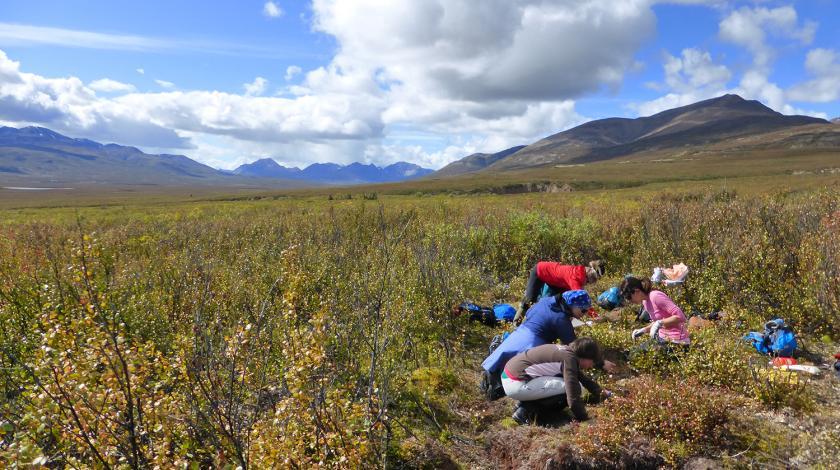 climate change in the mackenzie mountains mamet