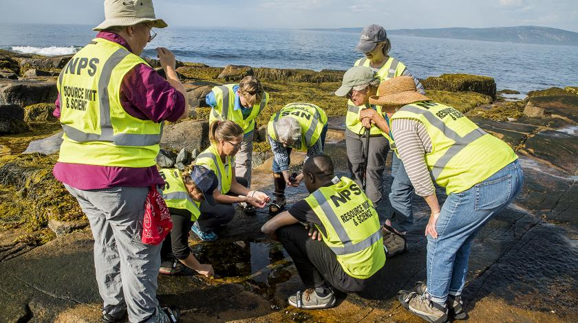 volunteers at acadia national park