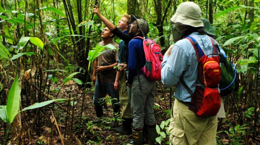 In the rainforest, track an abundance of wildlife, including primates and game birds, and record their behavior.
