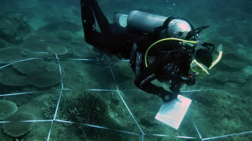 Earthwatch volunteers will establish underwater experimental plots