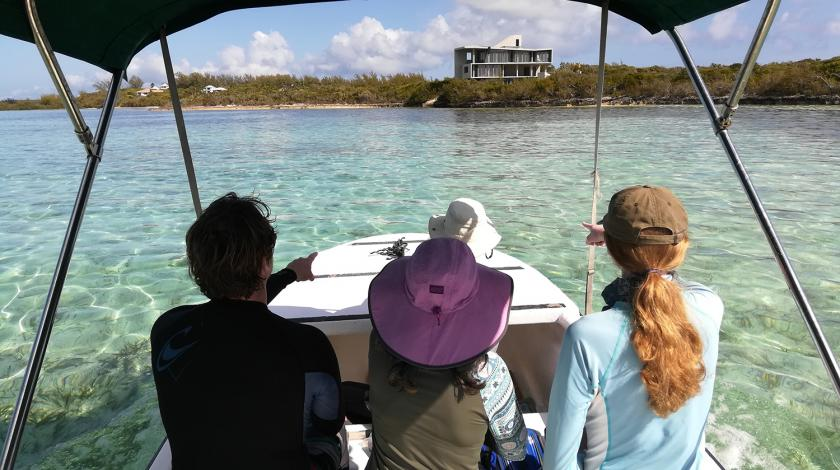 From a boat or in tidal creeks, assist researchers in tracking turtles and when spotted, snorkel to catch the turtle or set up a seine net.