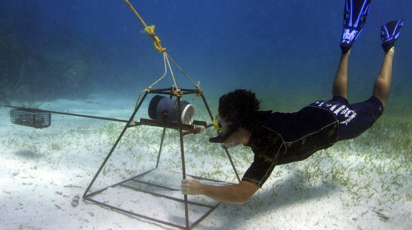 The team will set up BRUVs (baited remote underwater video cameras) at various spots in shallow water.
