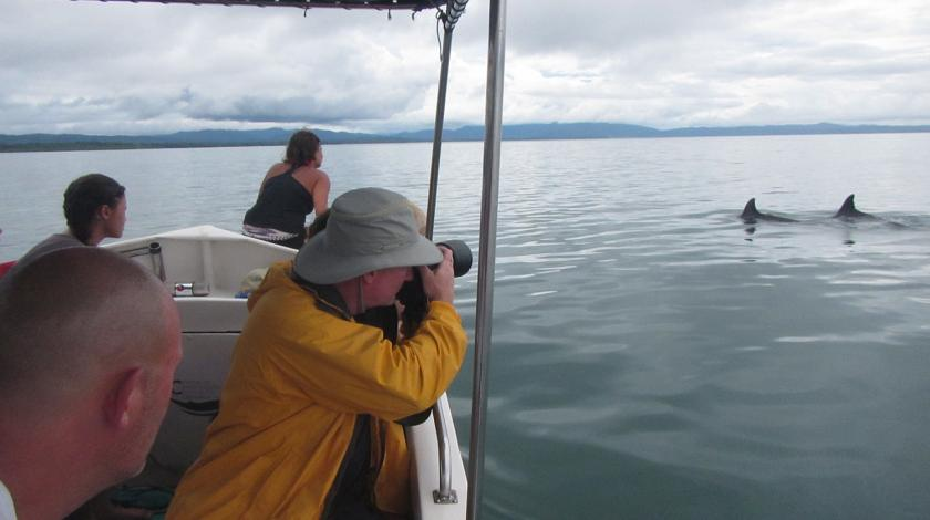 earthwatch volunteers observe dolphins and other marine mammals