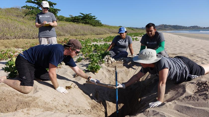Earthwatch volunteers excavate a hatched leatherback sea turtle nest