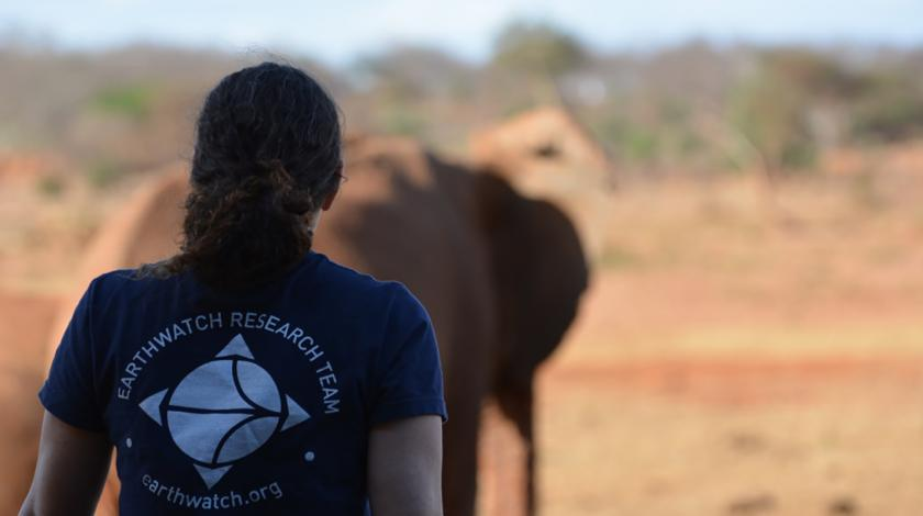 An Earthwatch volunteer watches an elephant herd (C) Lynn Von Hagen