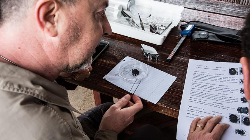 A volunteer analyzes an insect specimen (C) John Lechner