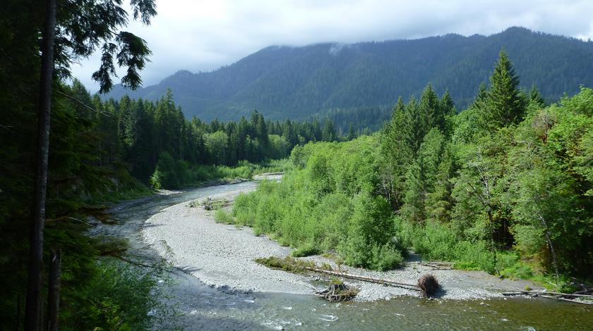 Deep within the woodlands of the Olympic Peninsula, you'll hike over twisting streams and through towering evergreens to record bird calls and collect habitat data.