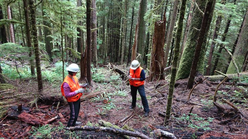 identify tree species, measure down wood, photograph the canopy, and estimate cover of understory plants.