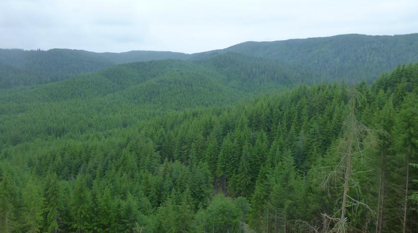 The verdant landscape of the Olympic Experimental State Forest