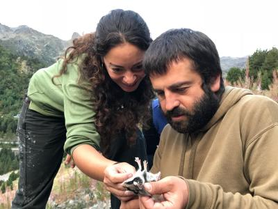 measuring mammals in the pyrenees