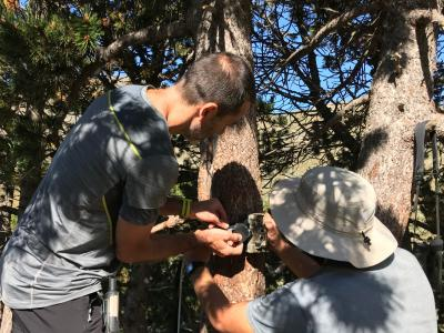 measuring trees and wildlife in the pyrenees