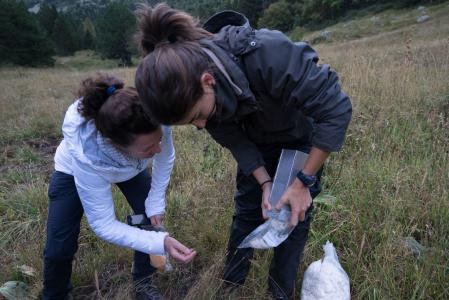 volunteers capture and measure small mammals