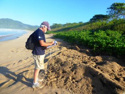 volunteer takes field notes on the beach