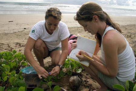 Earthwatch volunteers survey turtle nesting areas on the beach