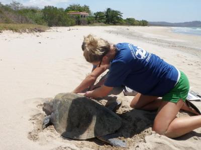 Earthwatch volunteer with a sea turtle