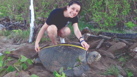 Earthwatch volunteer measures a sea turtle