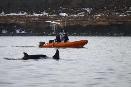 Earthwatch volunteers observe killer whales