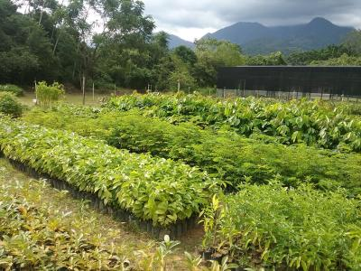 A tree nursery to help reforest the Atlantic Forest