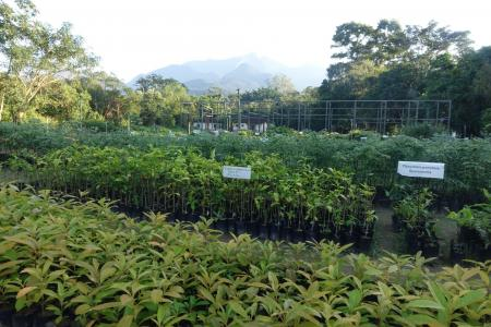 A tree nursery used to help reforest Brazil (credit Stan Rullman)