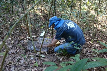 An Earthwatch volunteer setting a trap to monitor small mammal populations (credit Stan Rullman)