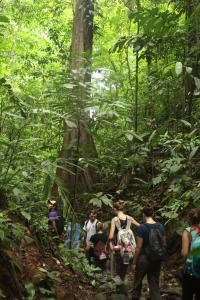 Earthwatch volunteers hike through a lush tropical forest (C) Michael Mao