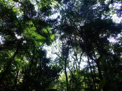 Help assess the canopy cover in the Atlantic Forest